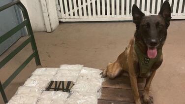 Perro policía muerde a persona no involucrada en el incidente que ayudaba a investigar