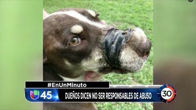 En Un Minuto Houston: Encuentran a los dueños de una perrita que fue maltratada pero niegan ser los causantes de las heridas del animal