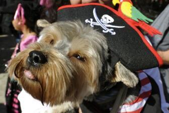 Los perros ya celebran Halloween