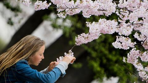 Conozca los síntomas que le indican que podría ser alérgico al polen