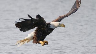 Las especies en peligro en EEUU enfrentan una amenaza adicional: el gobierno reduce su protección