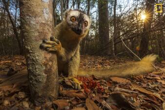 Imágenes espectaculares: la selección inicial del concurso de fotografía de viajes de National Geographic