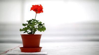 ¿Qué tipo de plantas pueden ayudarnos con la prosperidad y la buena suerte?