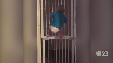 Tendencias en la red: un bebé en pañales desafía a sus padres