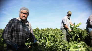 Estos son los trabajos que hacen los inmigrantes