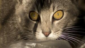 ¿Cat-ástrofe?: Australia planea matar a dos millones de gatos