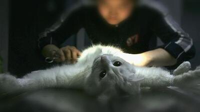 Mujer le hace cirugía plástica a su gato