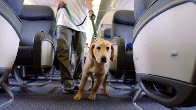 No más cachorros de apoyo emocional en los vuelos de Delta: restringen políticas de viaje para mascotas
