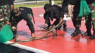 Dominio de serpientes: La asombrosa demostración militar en Indonesia