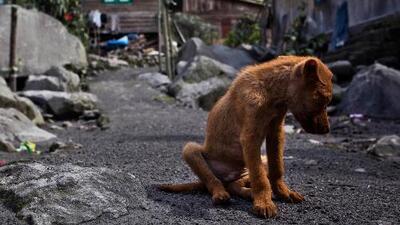 Emotivo video muestra lo que vive un perro abandonado
