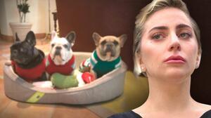 Lady Gaga ofrece 500 mil dólares de recompensa por sus perros de raza