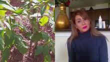 Mujer enfermó luego de comprar una planta en un vivero sin saber sobre su veneno