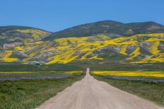 En fotos: La llanura que se convirtió en una alfombra gigante de flores en California