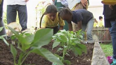 Con jardines de frutas y verduras, escuelas combaten la obesidad infantil en barrios vulnerables de Los Ángeles