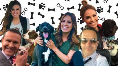 Más que mascotas mejores amigos: conoce a los amores perros de los conductores de Despierta América