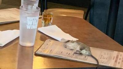 Gigantesca rata cae sobre el menú de una clienta en un restaurante en Los Ángeles