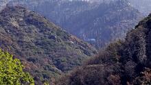 Autoridades de California hallan un árbol aún consumiéndose por las llamas de los incendios de 2020