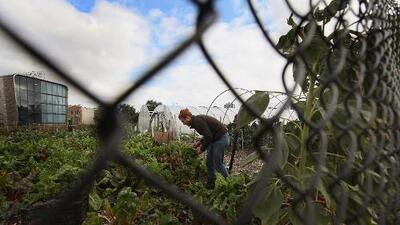 El gran potencial de la agricultura urbana va mucho más allá de los alimentos que produce