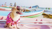 Consejos para proteger a tu perro en los días de intenso calor