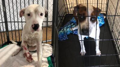 Más de 30 perros serán sacrificados si no encuentran un dueño en el Condado Fort Bend