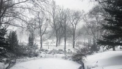 NY amanece totalmente nevada por la primera tormenta invernal fuerte