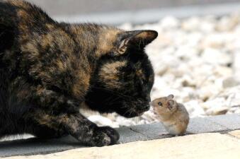 Gatita y ratón no quieren ser enemigos