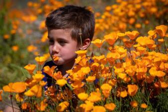 Coloridos jardines en el desierto: California se llena de flores gracias a las lluvias