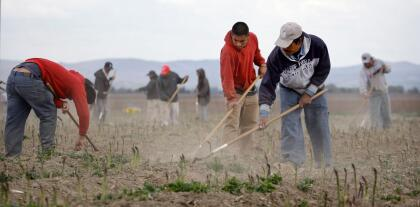 FILE In this file photo taken April 27, 2009, Latino workers till an asparagus field near Toppenish, Wash., on the Yakama Indian Reservation. Bringing unlikely allies together, a measure being backed by both farmers and immigrant advocacy groups is hoping to slow down the use of a federal immigration program that check's a workers eligibility to work in the U.S. Known as E-Verify, the program has been adopted by 11 cities in Washington state. (AP Photo/Elaine Thompson, File)