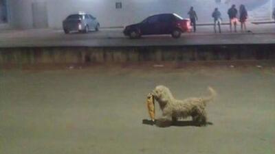 El 'saqueadorcito', un perrito que aprovechó el gasolinazo en México para robar comida