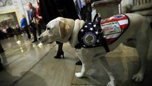 La nueva misión de 'Sully', el perro que acompañó a George H.W. Bush hasta el último momento