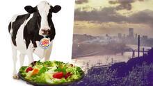 Burger King cambia la dieta de sus vacas para prevenir sus flatulencias y mejorar el medio ambiente