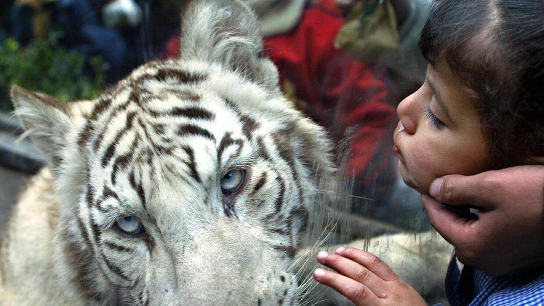 Deben Las Ciudades Cerrar Sus Zoológicos Noticias