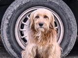 Las fotos que están logrando que cientos de perros callejeros de Latinoamérica tengan comida