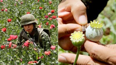 En fotos: La guerra del opio lleva al ejército mexicano a las montañas