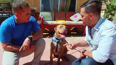 Luis Sandoval llevó a su fiel Maclovio a la escuela de perros del mismísimo César Millán