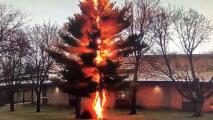 Un rayo convierte un árbol en cenizas en apenas unos segundos