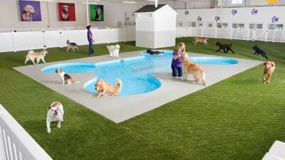 Aeropuerto JFK crea terminal para animales
