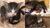 Contratista encuentra 15 gatos abandonados en el interior de una pared