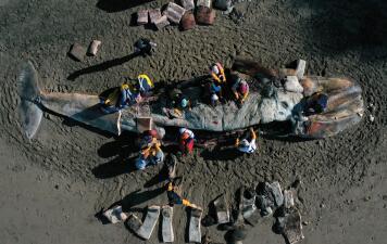En fotos: Por qué han aparecido tantas ballenas grises muertas en la bahía de San Francisco