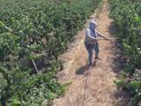 Trabajadores del campo reciben cientos de equipos de salud para protegerse contra el coronavirus