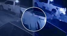 Video capta el robo de un gato frente a una vivienda al norte de Houston