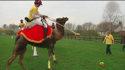 Monserrat juega polo en un camello