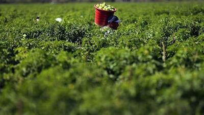 En los campos agrícolas de Homestead y Florida City se palpa el temor por los operativos de ICE