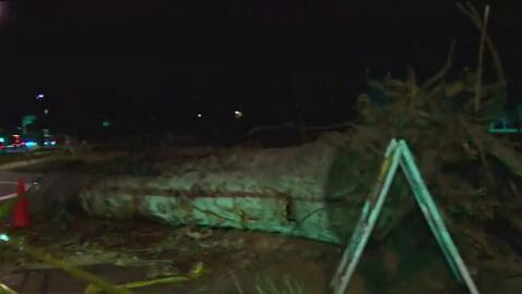 Árboles caídos, vendedores afectados y fallas en la energía eléctrica: lo que dejan los fuertes vientos en California
