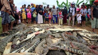 Un cocodrilo mata a un hombre y en venganza los habitantes de su aldea matan a cerca de 300 de estos reptiles