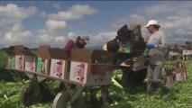 Trabajadores del campo bajo el sol: autoridades buscan proteger sus derechos