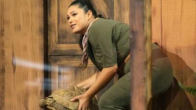Con un poco de dificultades, Vanessa Romo sacó adelante su reto en vivo con una tortuga