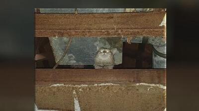 Rescatan a más de 80 gatos de una residencia en Denton