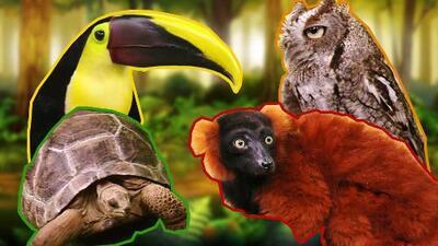 Nos visitaron estos adorables animales para recordarnos que tristemente están en peligro de extinción