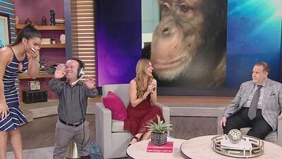Tienes que ver el video de Raúl de Molina por el que hasta los chimpancés se hacen fanáticos de Instagram